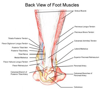 Ankle and Foot Pain 8