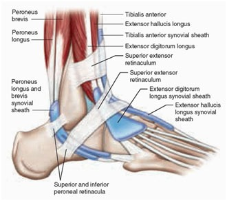 Ankle and Foot Pain 7