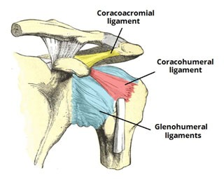 CORACOACROMIAL ARCH